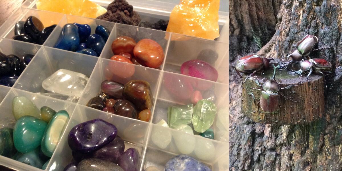 石集めとカブトムシで遊んだことを伝える画像